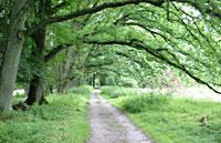 Eichenweg